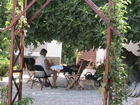 Treatment under the fig tree